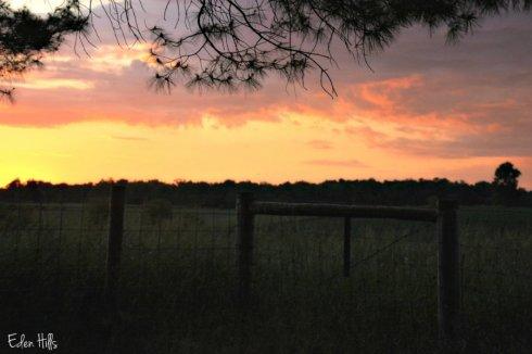 sky fence_8727ews