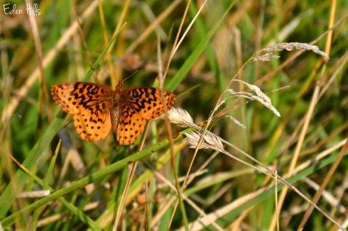 butterfly_2052ews