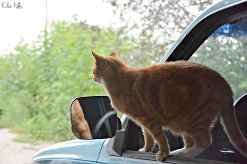Cat_3112ews