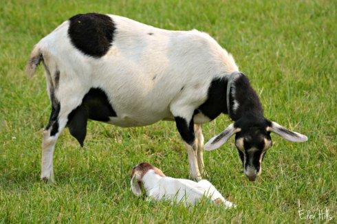 Bambi and Daisy