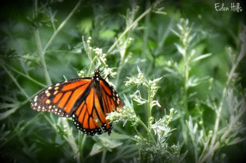 Monarch_2872ew