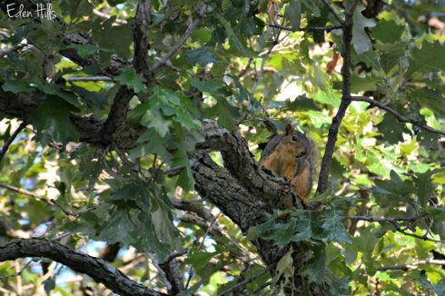 squirrel_2037ews