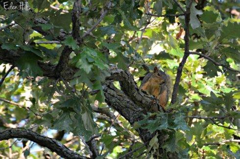 squirrel_2037ews