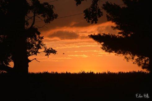 Sunset_1715ws