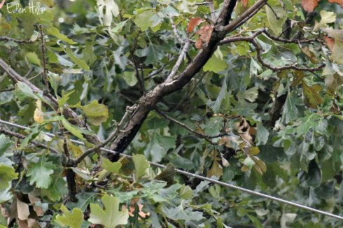 tree_1175ews