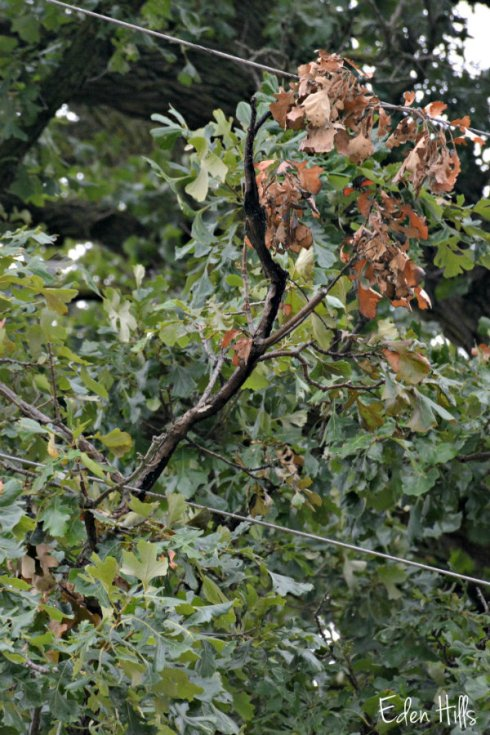 tree_1177ews