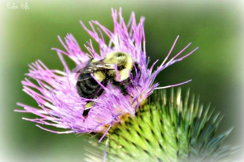 Bee 4801ews