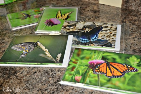 butterfly note card4634ews