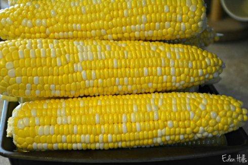 Corn_3424ews