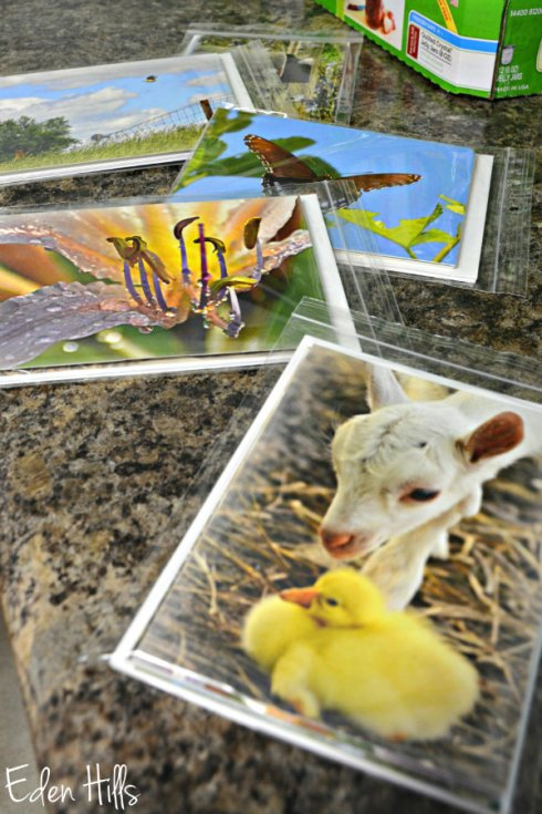 Note Cards 4635ews