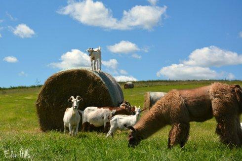 Pasture 4611ews