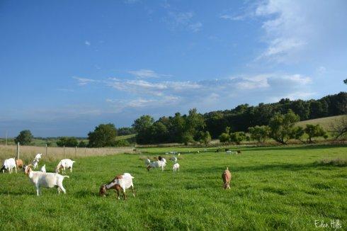 pasture_4456ews