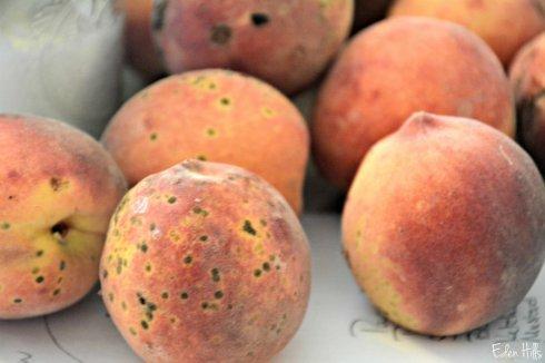 peaches_3422ews