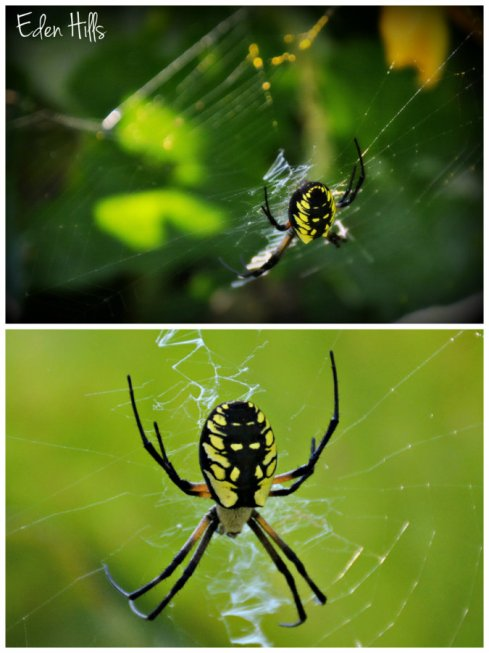 spider collage