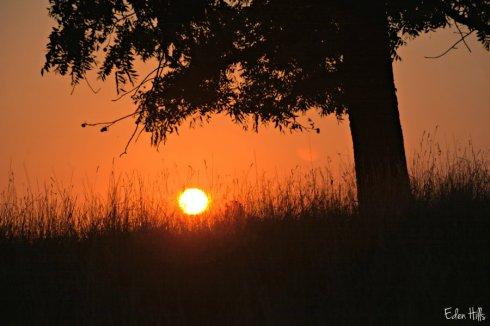 sunset_3441ews