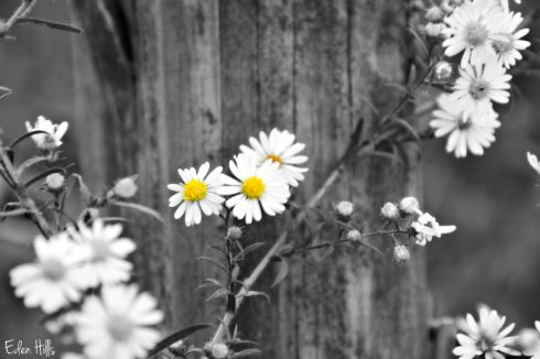flower-post_5589e2ws