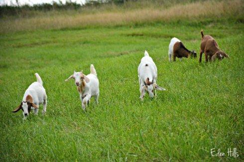 Elmer, Jacob, Daisy, George and Martha