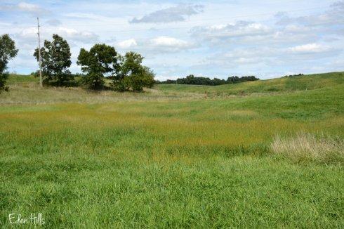 grassy-bottom_5156ews