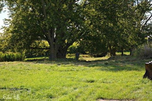trees_5352ews