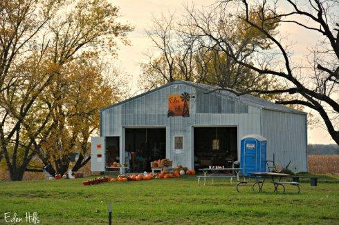 eden-hills-pumpkin_7163ews