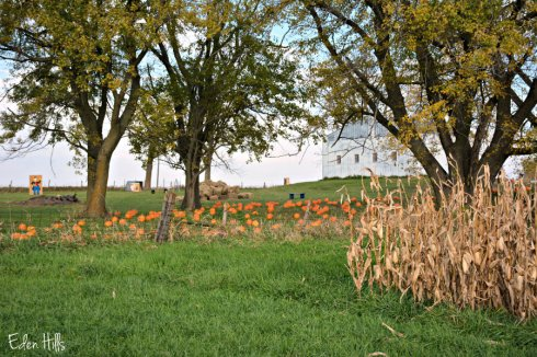 eden-hills-pumpkins-patch_7155ews
