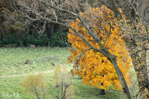 fall-deer_6430ews