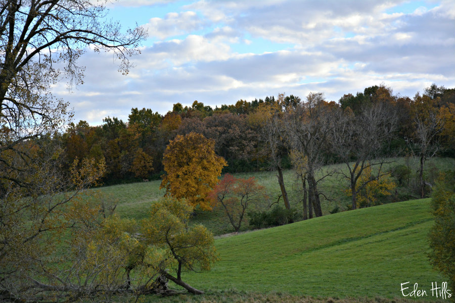Fall colors eden hills for Eden hill walk in