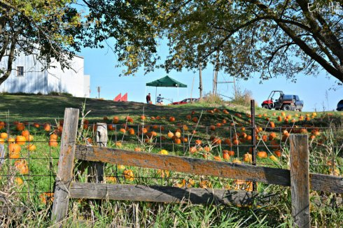 pumpkin-patch_6700ews
