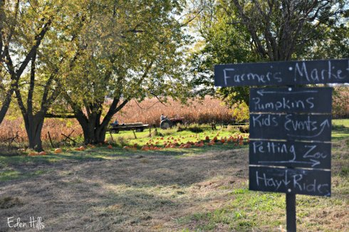 pumpkin-patch_6710ews