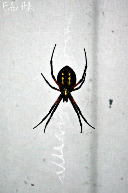 spider_5888ews