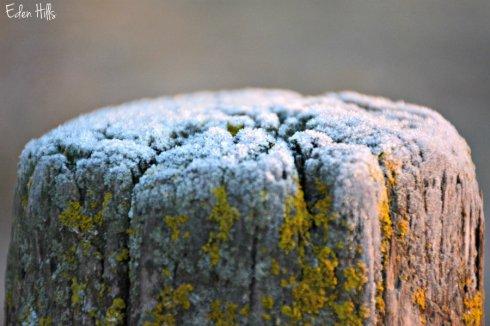 frosty-post_8017ews
