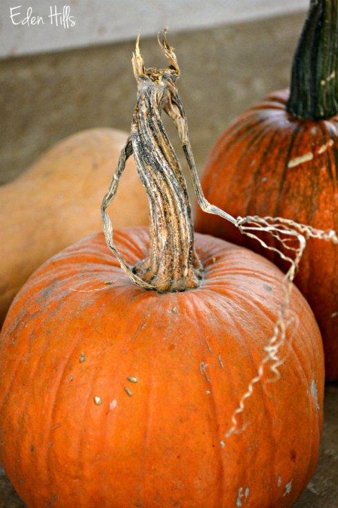 pie-pumpkin_7881ews
