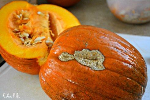 pumpkin_7884ews