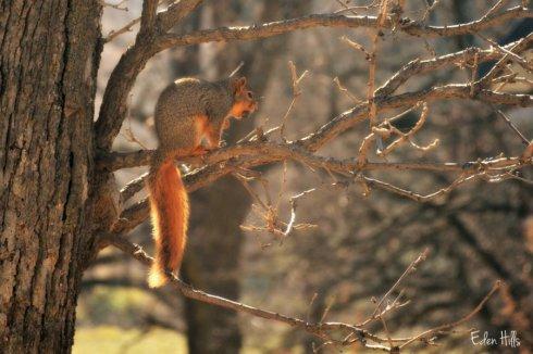 squirrel_7649ews