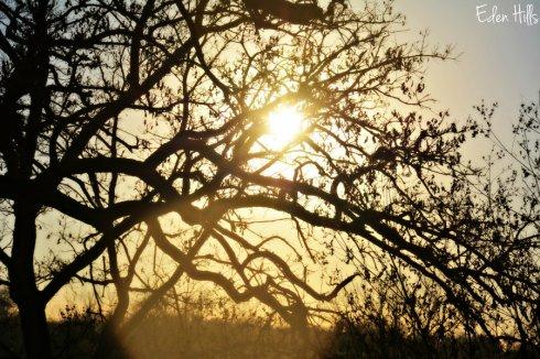 sunset_7578ews