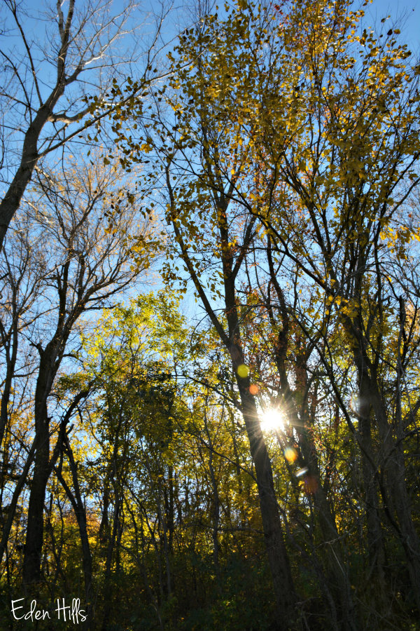 Nature walk eden hills for Eden hill walk in