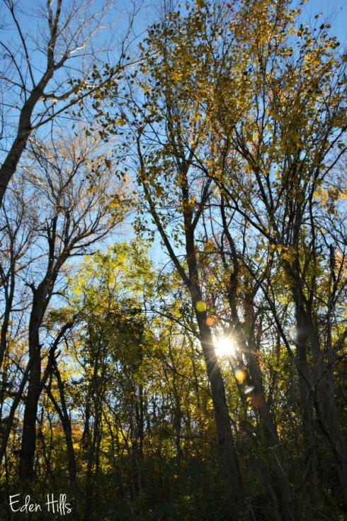 trees_7528ews
