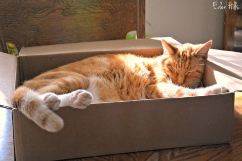 cat-in-box_8518ews