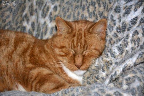 cat_8795ews