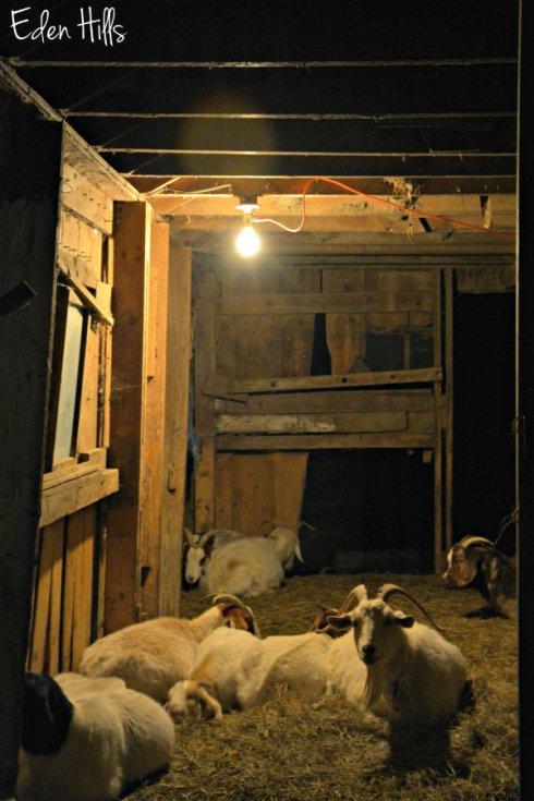 night-barn_8368ews