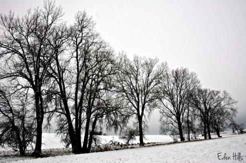 snowy-pasture_8222ews