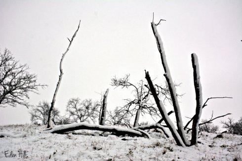 snowy-pasture_8236ews