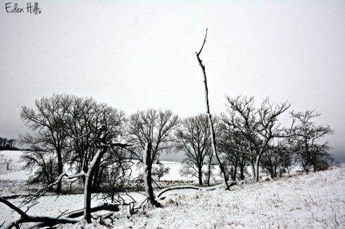 snowy-pasture_8240ews