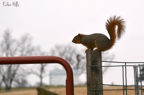 squirrel_8131ews