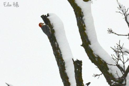 woodpecker_8257ew