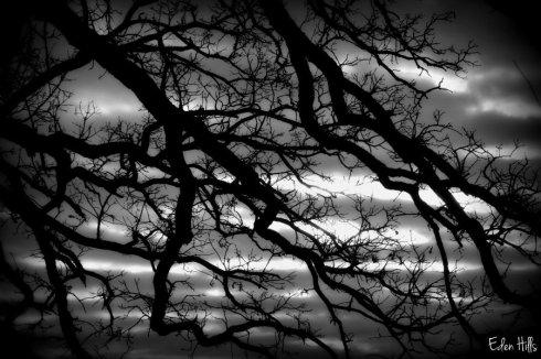 tree_9431ews