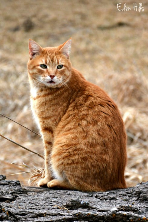 cat_0660ews
