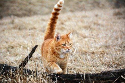 cat_0695ews