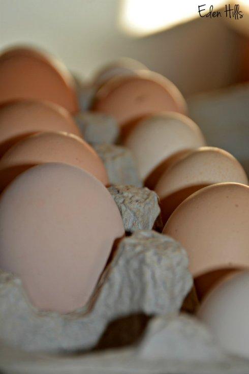 eggs_1501ews