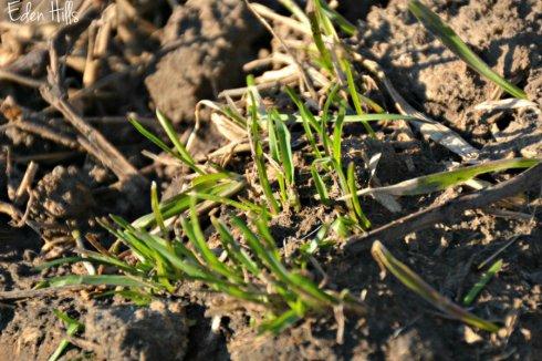 grass_1476ews